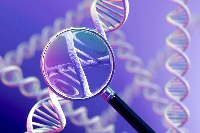 ДНК тест на отцовство